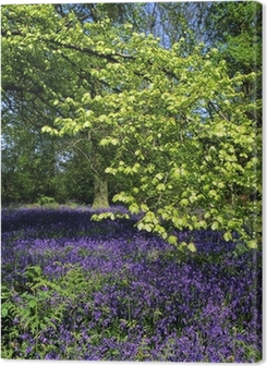 Bluebell Wood Premium prints