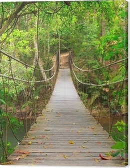Bridge to the jungle,Khao Yai national park,Thailand Premium prints