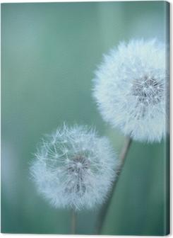 Dandelions Premium prints