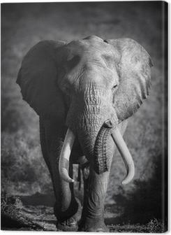 Elephant Bull (Artistic processing) Premium prints