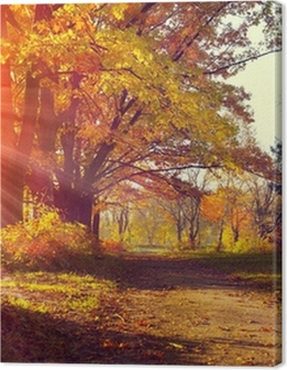 Fall. Autumnal Park. Autumn Trees and Leaves in sun light Premium prints