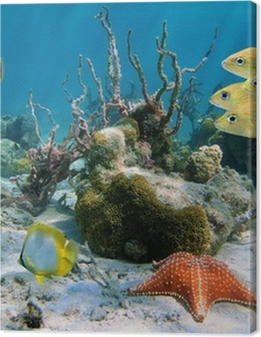 Fishes and sea star Premium prints