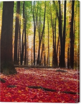 Forest in autumn with golden light Premium prints
