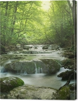 forest waterfall Premium prints