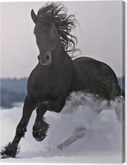 Frisian horse on snow Premium prints