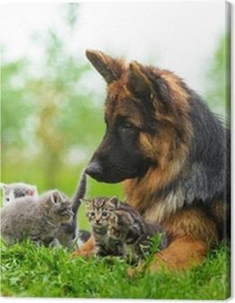 German shepherd dog and five little kittens Premium prints