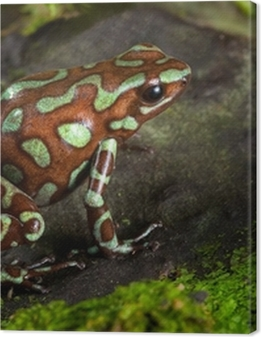 golden poison dart frog Premium prints