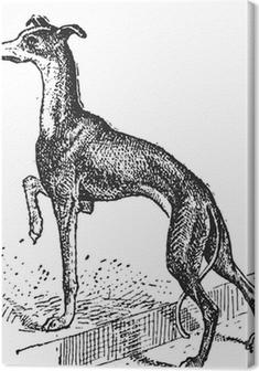 Greyhound, vintage engraving Premium prints