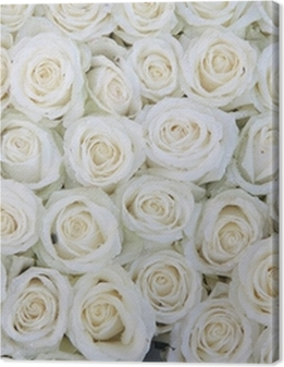 group of white roses after a rainshower Premium prints