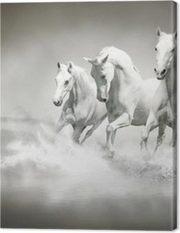 Herd of white horses running through water Premium prints