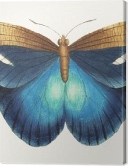 Illustration of animal artwork Premium prints