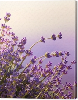 Lavender flowers bloom summer time Premium prints