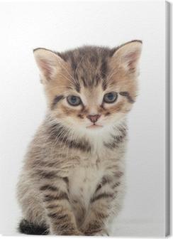 little kitten on white background Premium prints