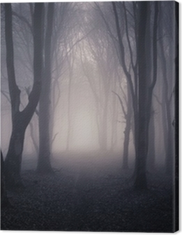 path through a dark forest at night Premium prints