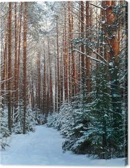 pine forest, winter, snow Premium prints
