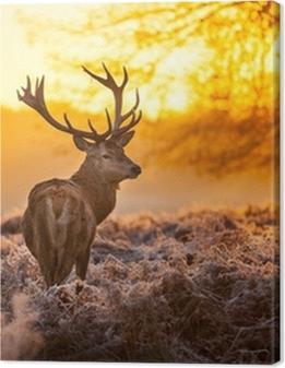 Red Deer in the morning sun Premium prints