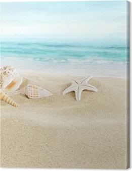 Shells on sandy beach Premium prints