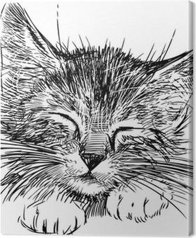 sleeping cat Premium prints