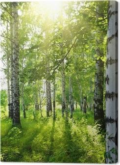 summer birch woods with sun Premium prints
