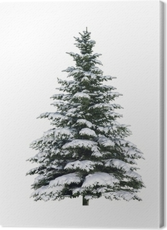 Tanne im Schnee Premium prints