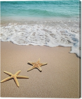 two starfish on a beach Premium prints