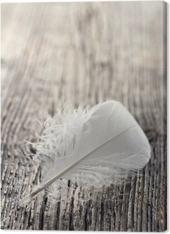 White feather Premium prints