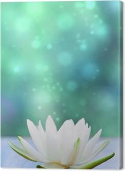 white water lilly flower Premium prints