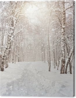 Winter birchwood Premium prints