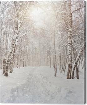 Winter birchwood Premium prints
