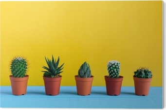 PVC-Bilde Kaktus på skrivebordet med gul wal
