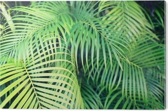 dating palmu jouset