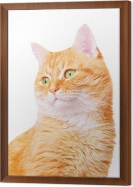 Quadro Su Tela Bellissimo Gatto Adulto Rosso Pixers Viviamo Per