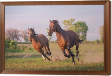Quadri su Tela Cavallo andaluso cavalli • Pixers® - Viviamo per il ...