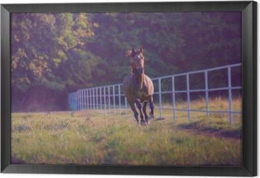 Quadro in Cornice Marrone cavallo al galoppo sullo sfondo alberi lungo recinto bianco in estate