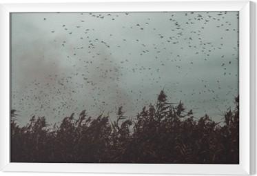 Quadro in Cornice Mucchio di uccelli che volano vicino alla canna in stile vintage cielo-scuro in bianco e nero