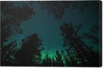Quadro su Tela Aurora boreale sopra gli alberi in Norvegia