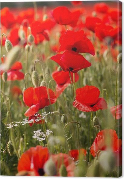 Quadro su Tela Bel campo di papaveri rossi • Pixers® - Viviamo per ...