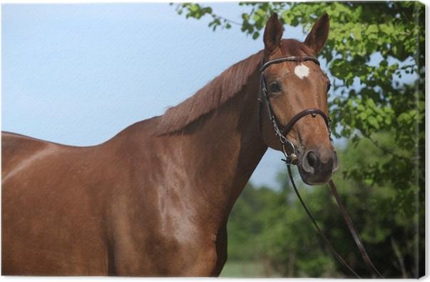 Quadro su Tela Bel cavallo marrone con stella bianca sulla testa ...