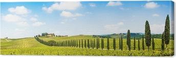 Quadro su Tela Bellissimo paesaggio con vigneto, Chianti, Toscana, Italia