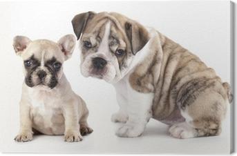 Quadro su Tela Bulldog inglese cucciolo e Bulldog francese