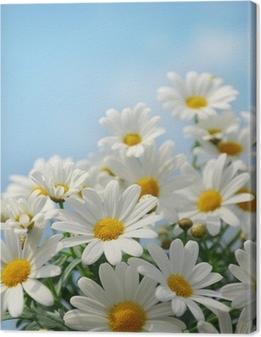 Quadro su Tela Campo di daisy