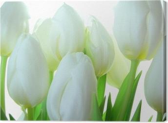 Quadro su Tela Close-up di mazzo di tulipani bianchi su bianco ...