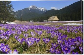 Quadro su Tela Croco in Chocholowska valle, Tatra Mountain, Polonia