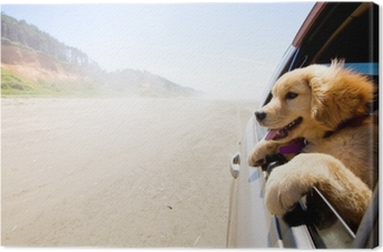 Quadro su Tela Cucciolo guardando fuori dal finestrino di un'auto