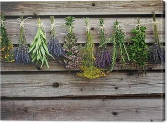 Quadro su Tela Erbe di essiccazione sul granaio di legno in giardino