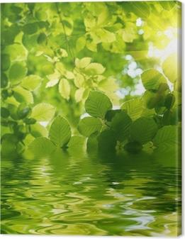 Quadro su Tela Foglie verdi con raggio di sole.