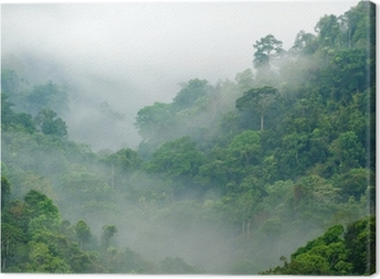 Quadro su Tela Foresta pluviale mattina nebbia