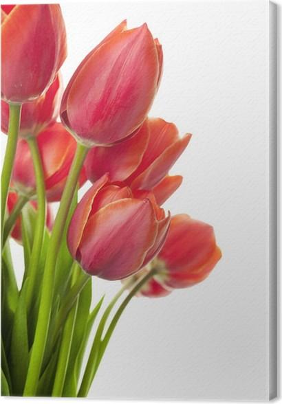 Quadro su Tela Fresh tulipani Bella / isolato su bianco / verticale ...
