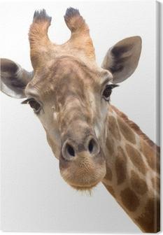 Quadro su Tela Giraffe primo piano