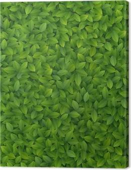 Quadro su Tela Green leaves texture.